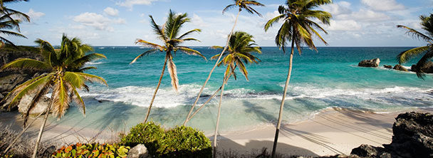 a secluded tropical beach with palm trees